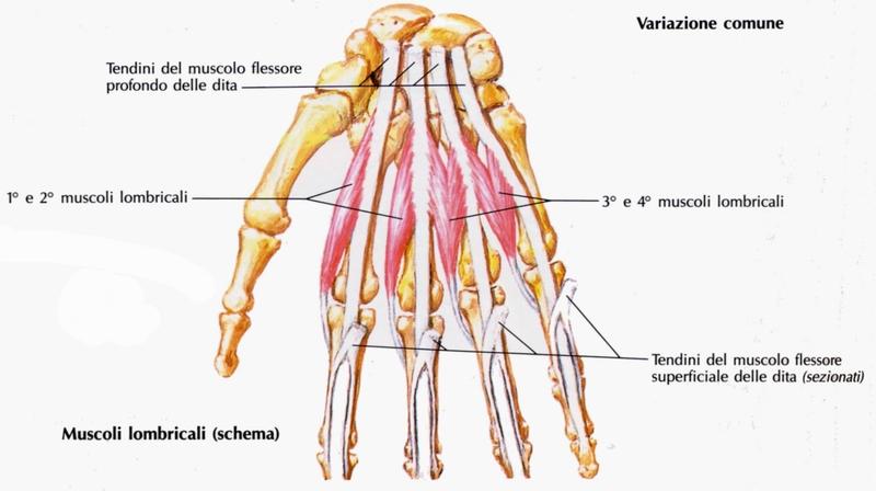Cliniche su cura di ernia di una spina dorsale senza operazione