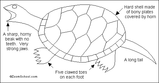 freshwater turtle adaptations