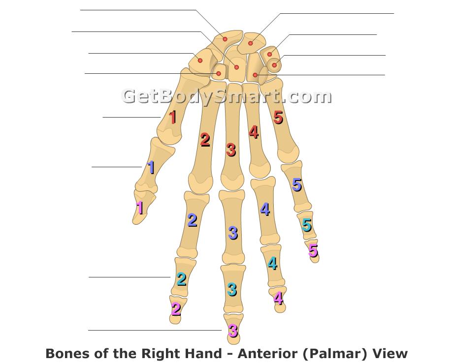 Label Hand Diagram Schematic Diagram