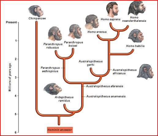 human evolution detailed chart: Human evolution thinglink