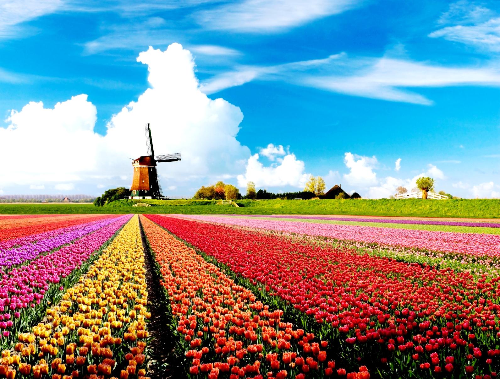 Holandija - Page 3 Kr5EG37DnnpUeNyecXBcCs9m