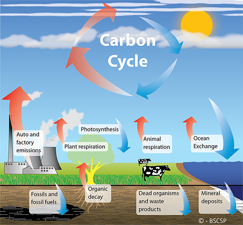 the role of microbes in the carbon cycle and the effects of the different rainfall patterns on the e Carbon dioxide concentration changes over a long period of time have been determined by a variety of the enhanced greenhouse effect refers to the suggested link between the increase in greenhouse gas emissions by man the effects of increased temperatures (eg rising sea levels) could destroy.