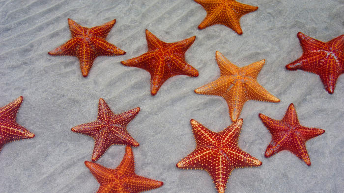 starfish by lorna dee cervantes thinglink