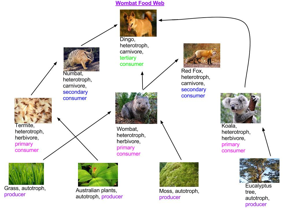What Eats Cane Toads Food Chain