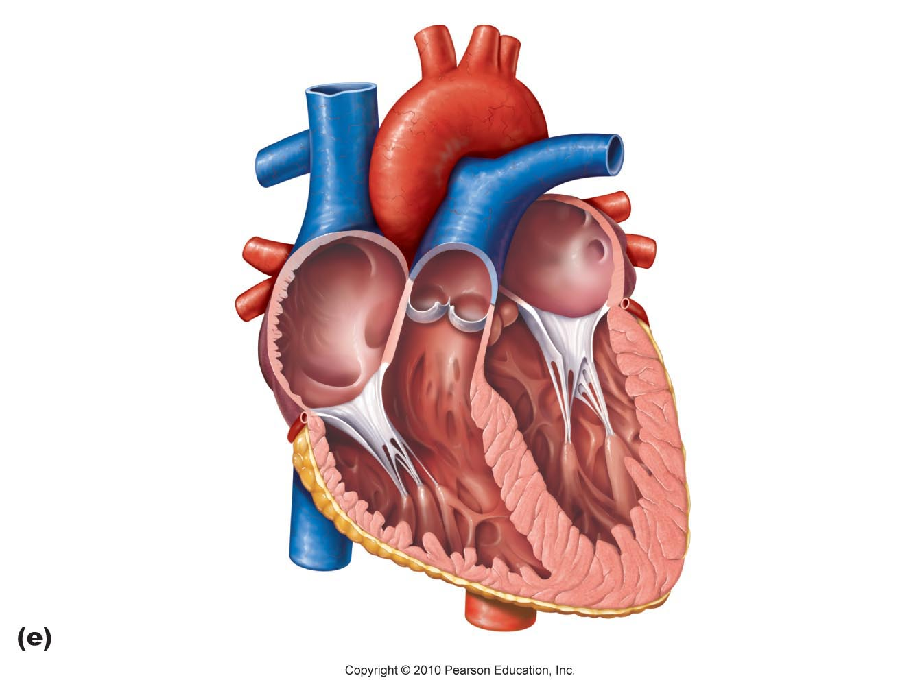Heart diagram thinglink ccuart