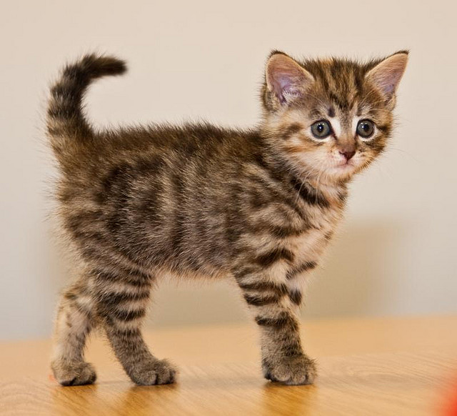 what is the best litter box for multiple cats