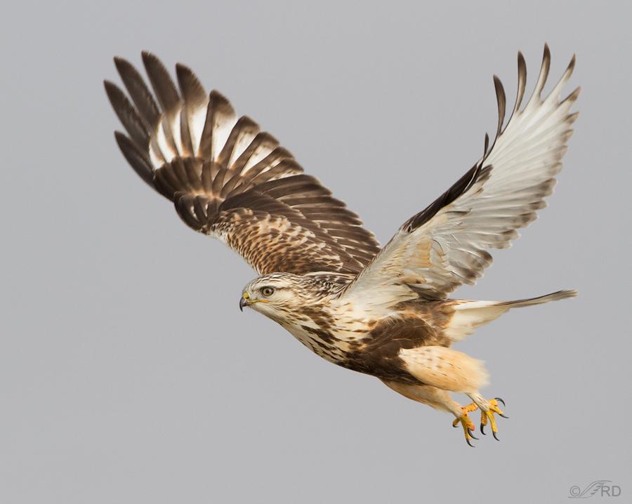 Image result for hawks