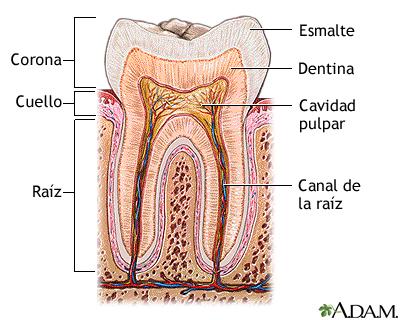 Una corona se utiliza para cubrir completamente un diente... - ThingLink