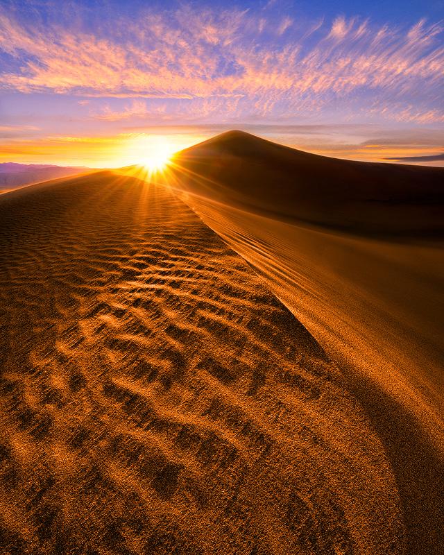 biotic abiotic factors of sand dunes