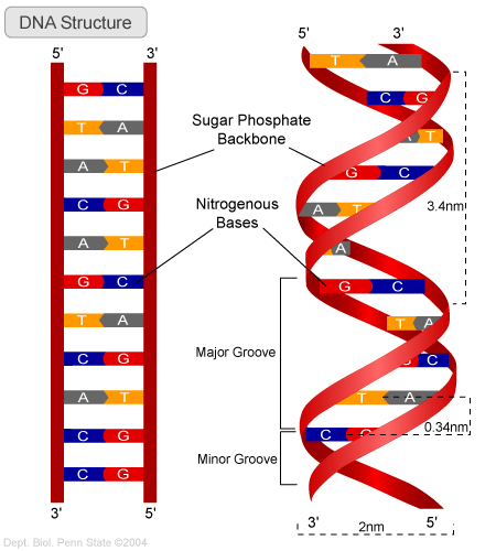 This video explains the mutations that can occur in dna this video explains the mutations that can occur in dna thinglink ccuart Images