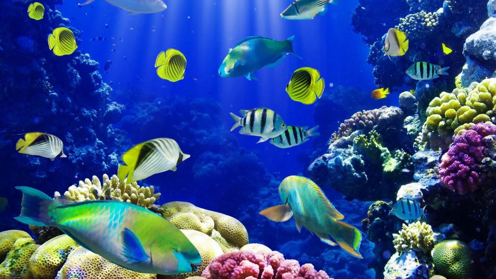 Newtons Laws Ocean Period 1