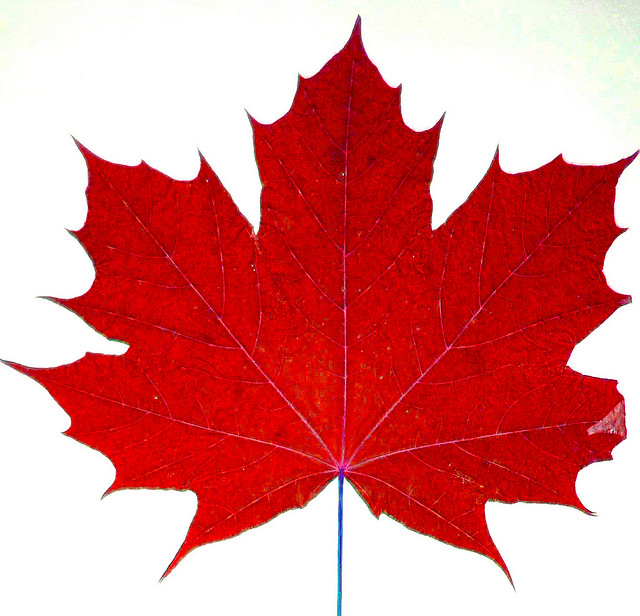 Maple Leaf The Symbol Of Canada