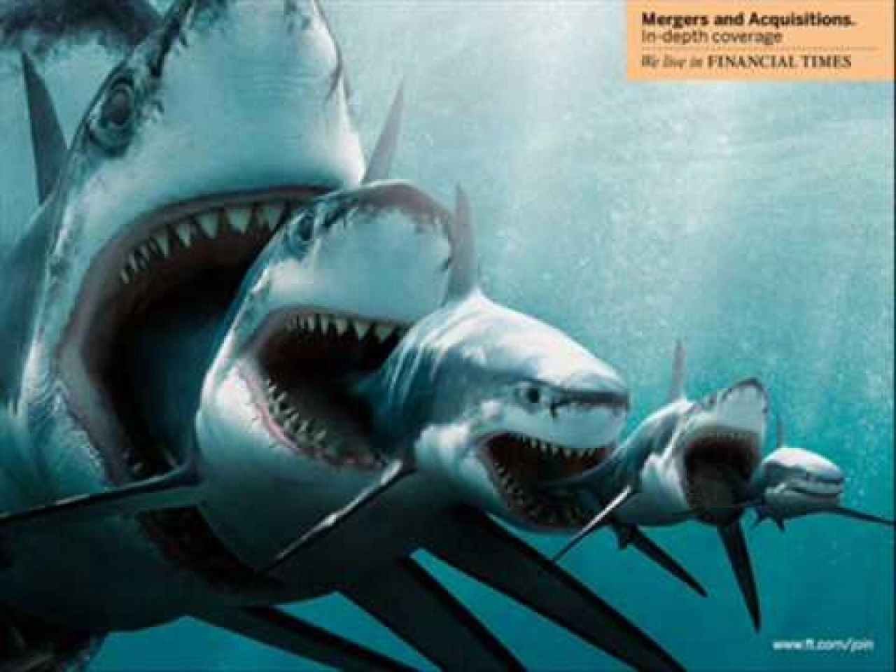 Megalodon Sharks - ThingLink