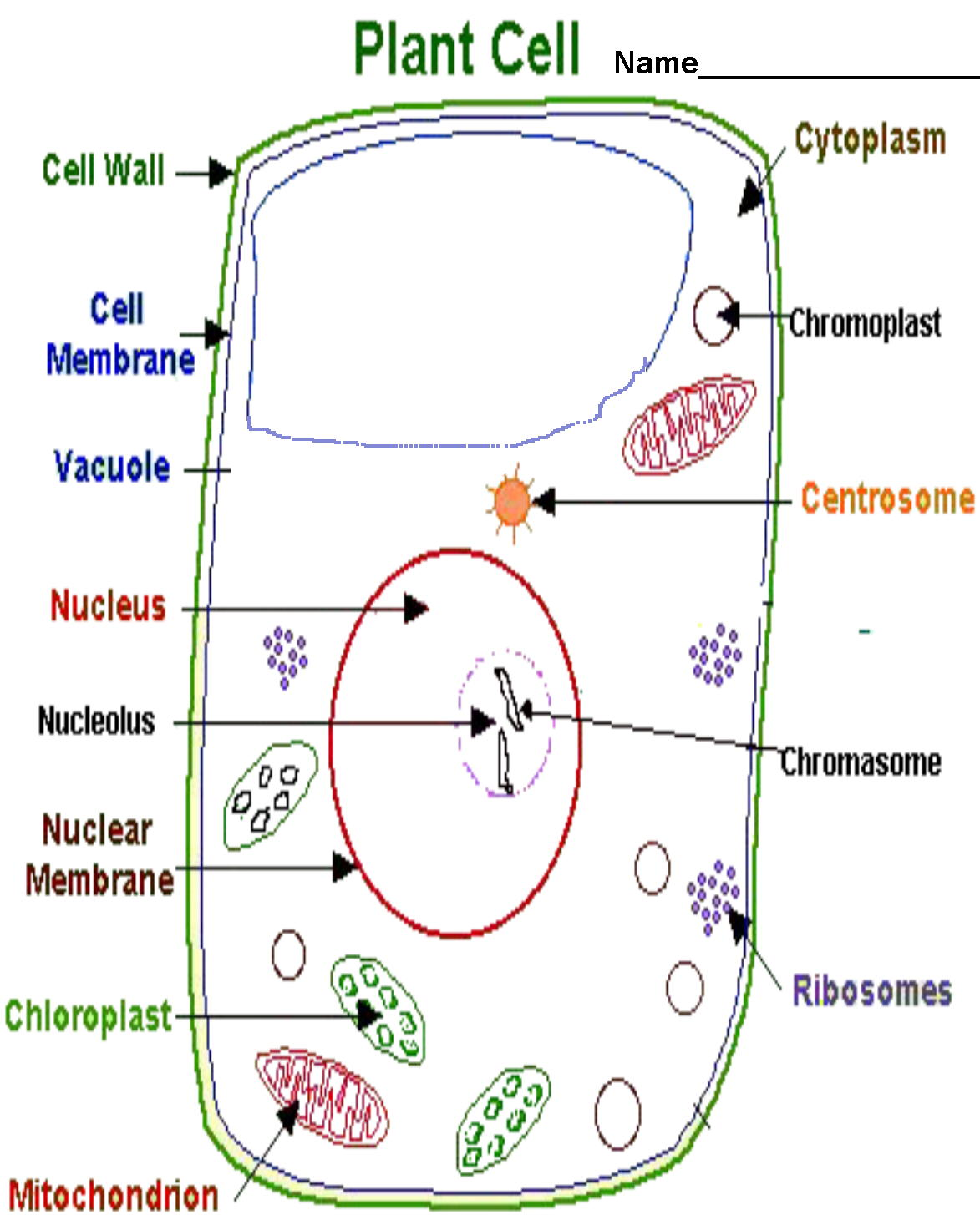 Cell organelle functions thinglink robcynllc Choice Image