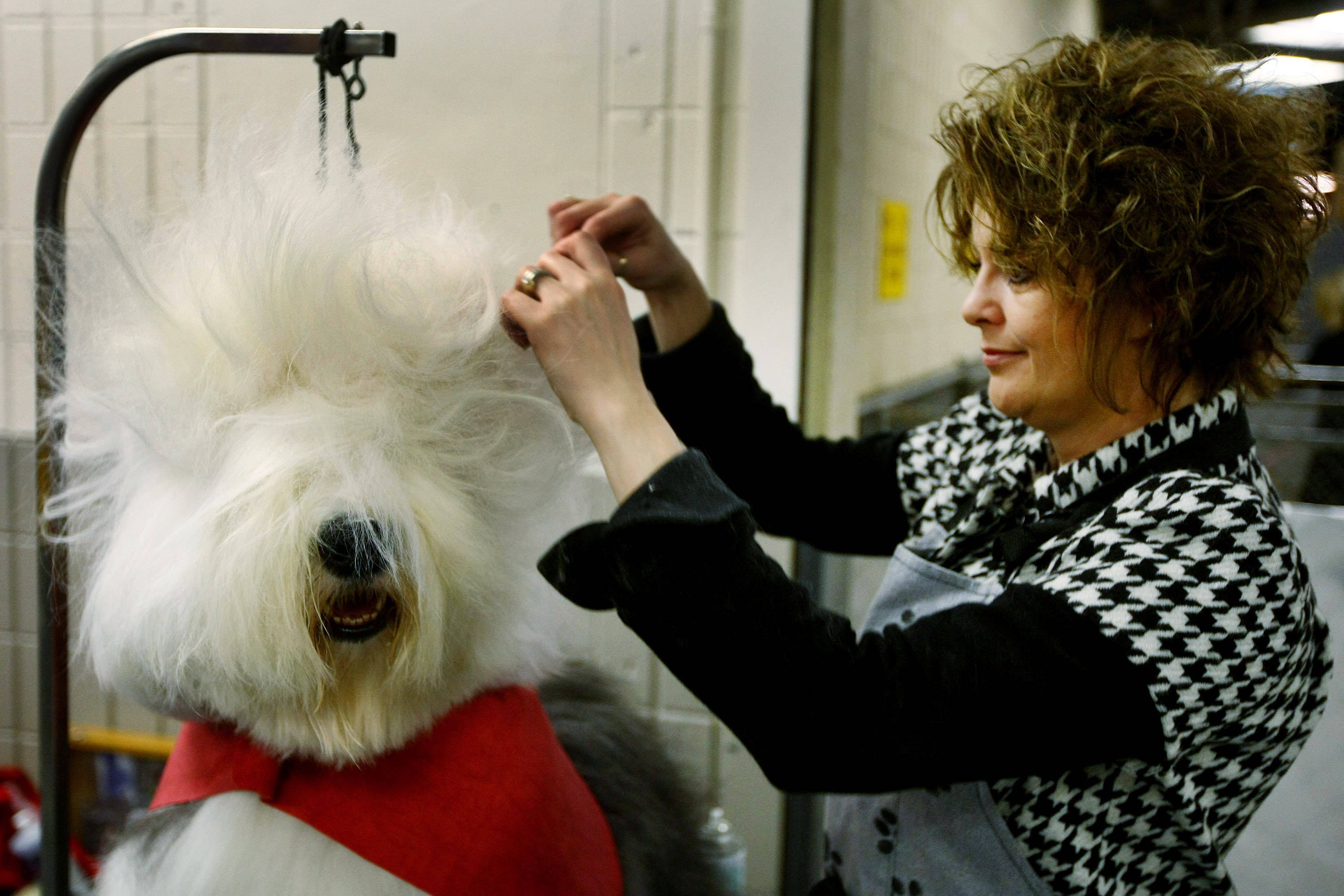 Image result for Dog Groomers