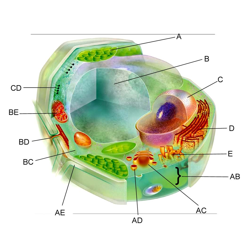 Plant cell thinglink ccuart Image collections