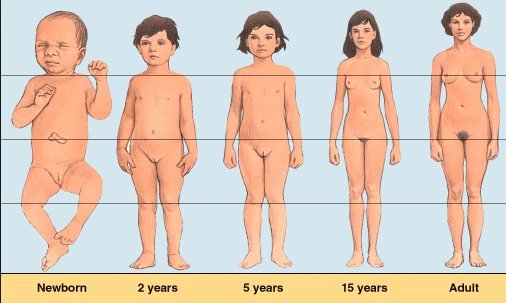 how long is puberty for females