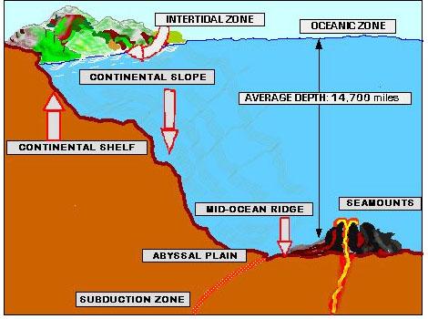 Features Of The Ocean Floor Diagram Thefloors Co