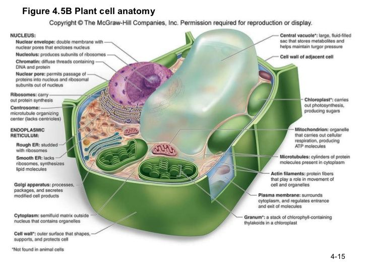 A Cell Is Like A Hospital Thinglink
