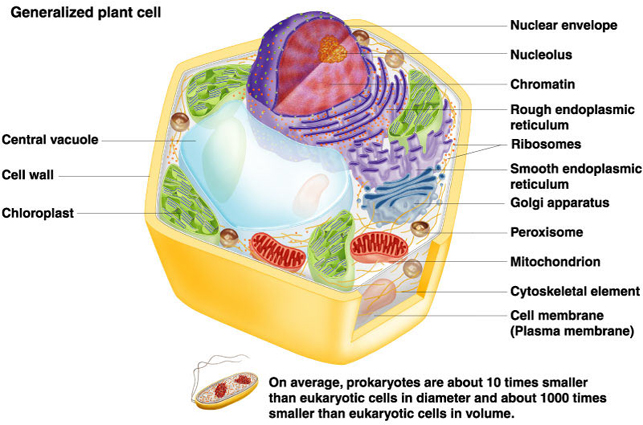 109d78bc7e92 Plant Cell