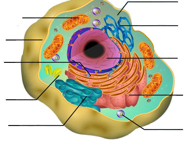 Animal Cell Diagram Kaylee M ThingLink – Animal Cell Diagram Worksheet