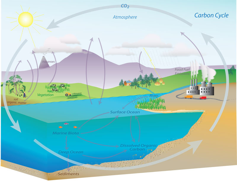 Carbon cycle ThingLink – Carbon Cycle Diagram Worksheet