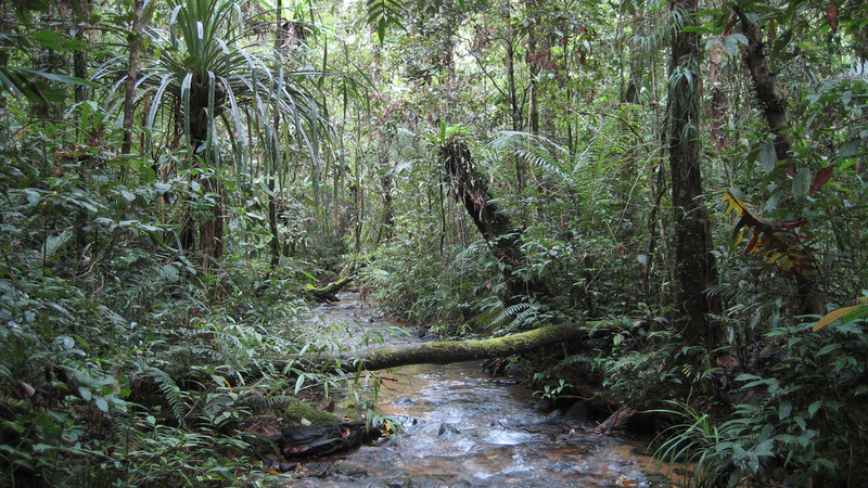 an examination of the endangerment of rain forests Top five causes of species extinction  the world's rain forests could completely  the study saw examination of the pattern of extinction for 177 species.
