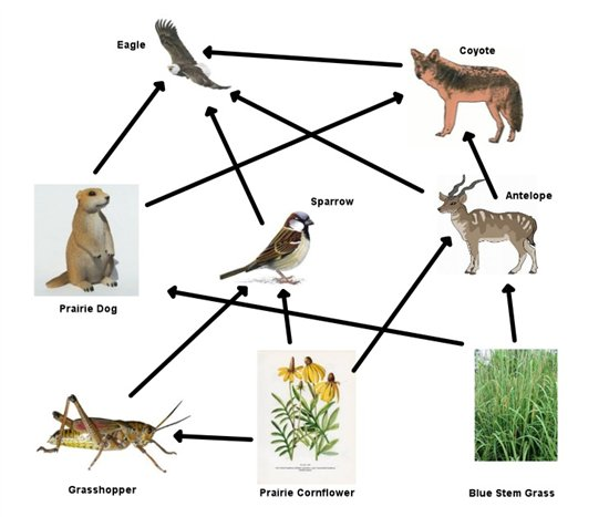 predator prey relationship in the grassland biome project