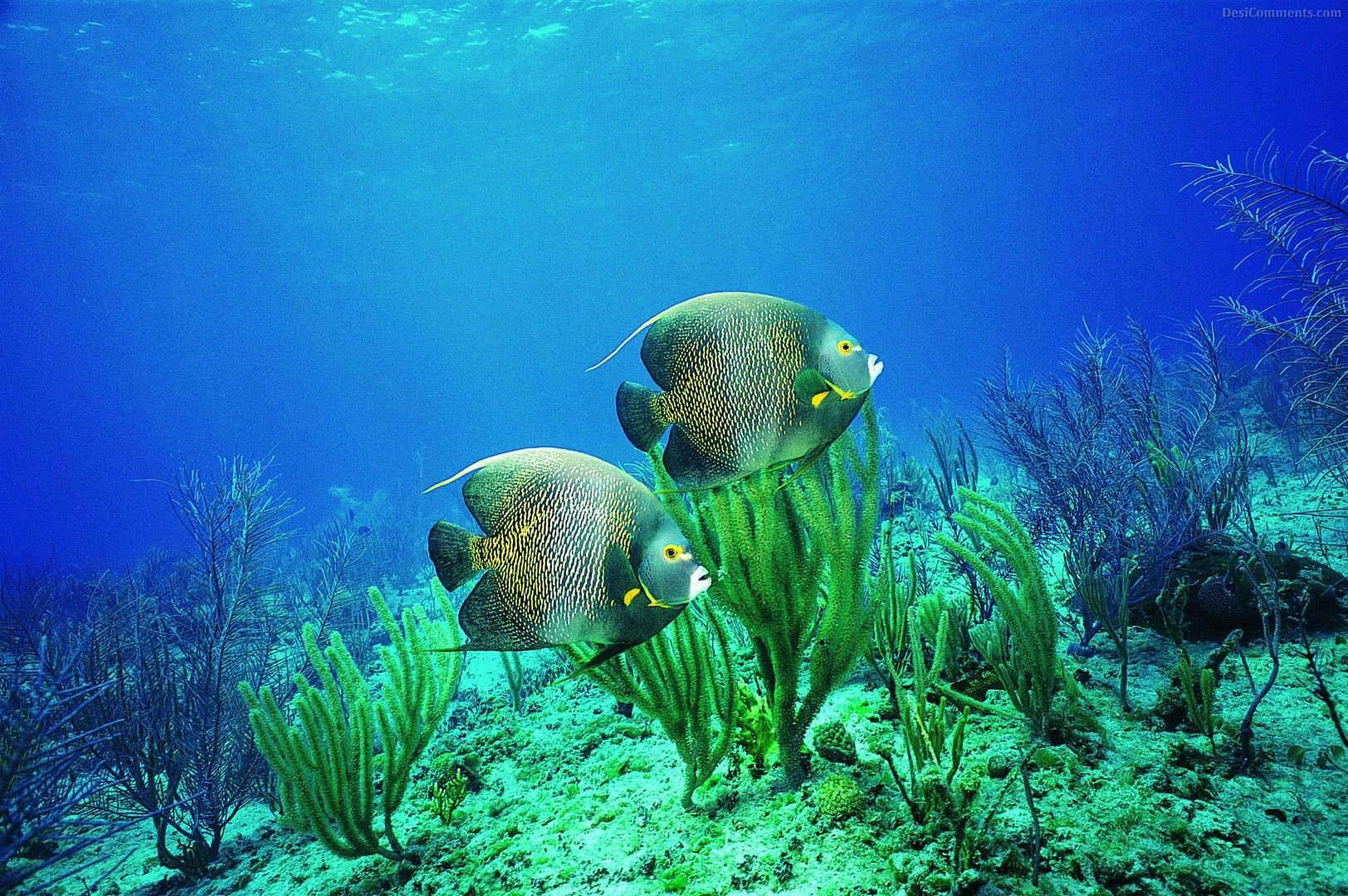 Marine Biome - ThingLink