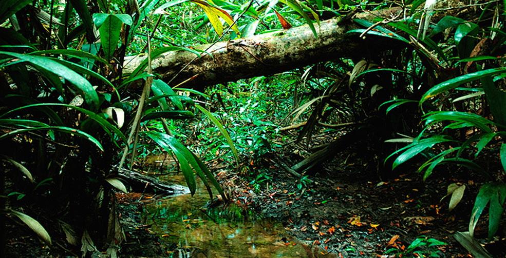 Rain forest ecosystem Juan Betances - ThingLink