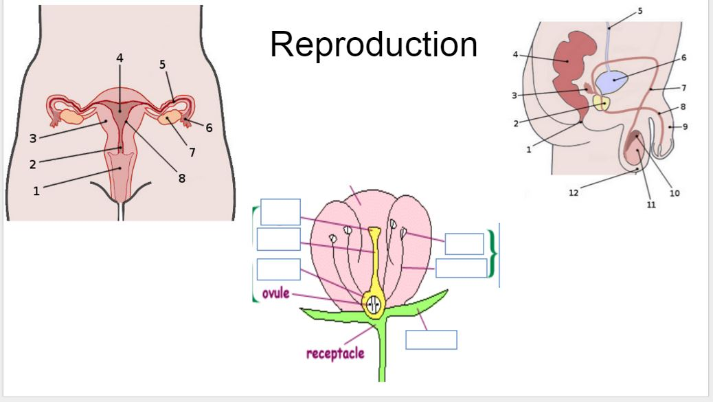 Female Reproductive System Label Your Image Male Reprod