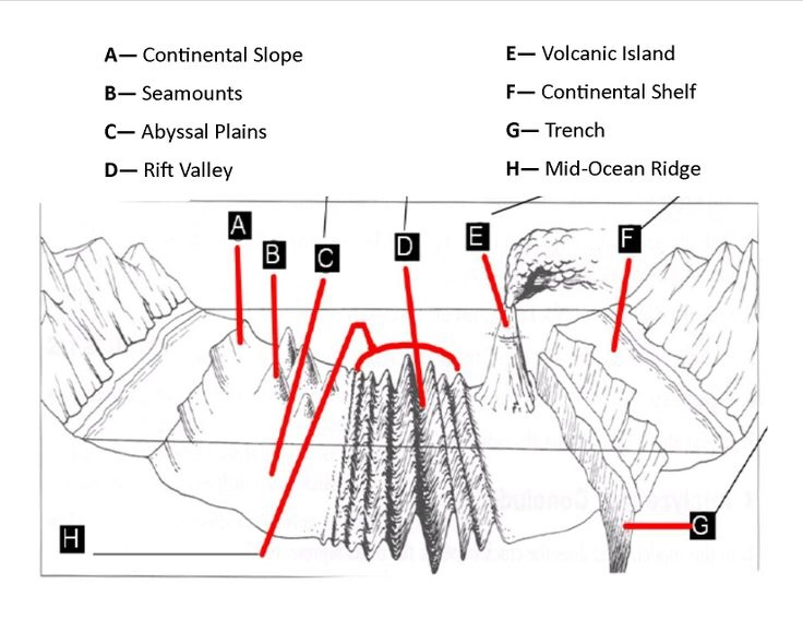 the ocean floor diagram ocean waves diagram for ocean #45