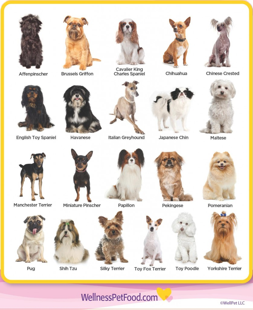 Small Dog Breeds With Pictures And Names Goldenacresdogs Com