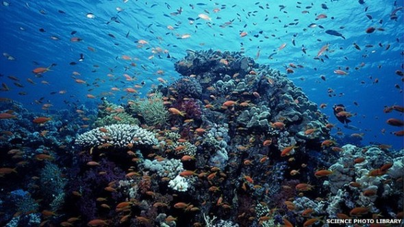 biotic and abiotic factors of an ocean ecosystem