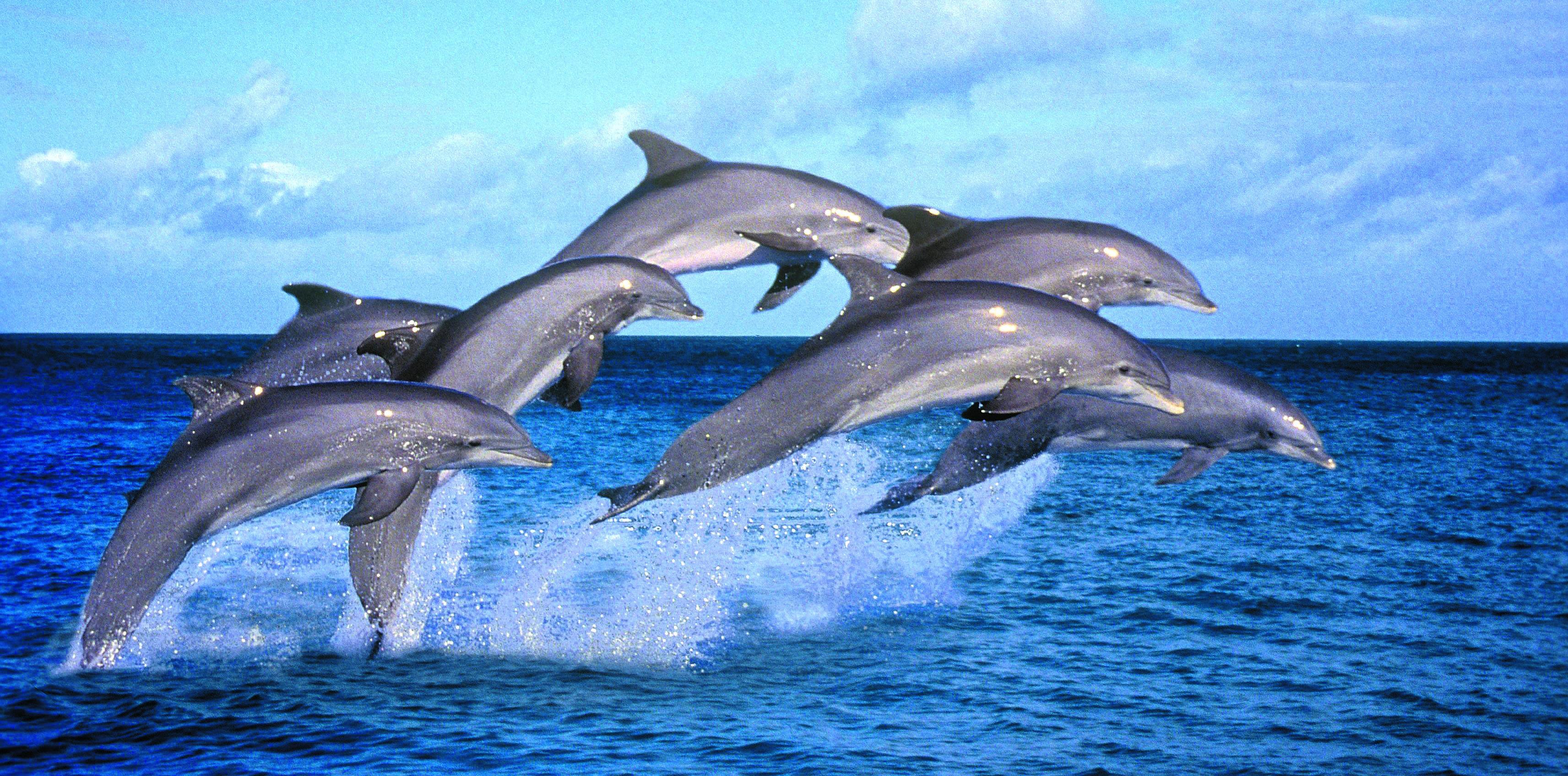 Risultati immagini per delfino