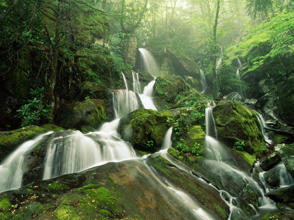 Tropical Rainforest Biome - ThingLink