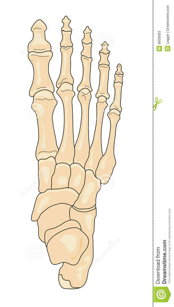 Right foot (superior view) - ThingLink