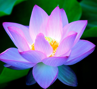 Lotus Flower Project