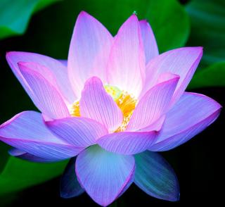 Lotus flower project mightylinksfo