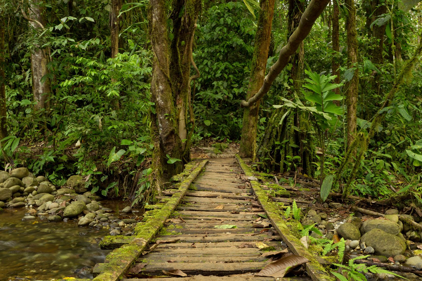 the background information on the amazon rainforest and other rainforests Teacher background information: types of rainforests there are two types of rainforests -- tropical and temperate tropical and temperate rainforests.