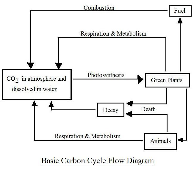 Co2 Is Taken Up By Producers During Photosynthesis And Re